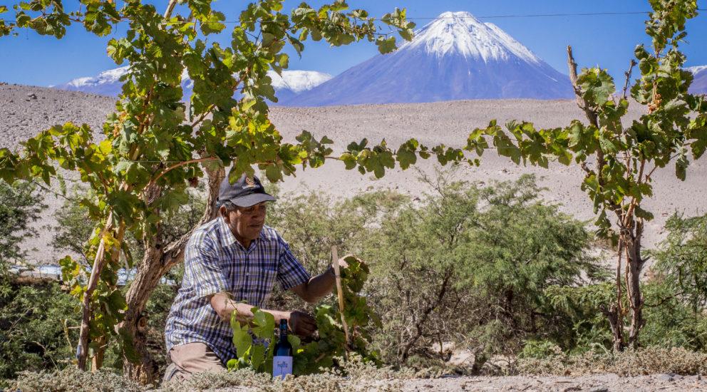 Ayllu, el sabor del desierto