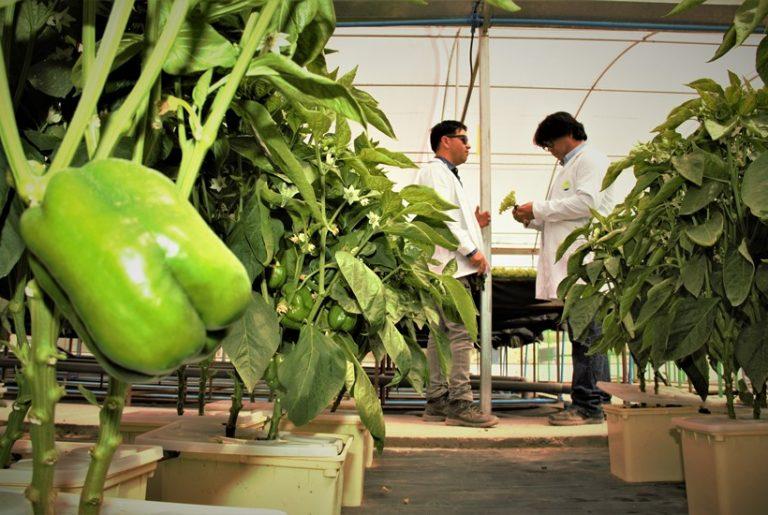 Software permitirá desarrollar productos agrícolas de primer nivel en el Tamarugal