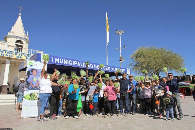 Agricultores de La Tirana celebran junto a la comunidad su primera cosecha de lechugas