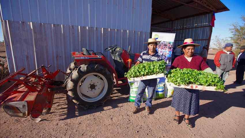 Agricultores de Colonia Agrícola de Pintados fortalecen agricultura local