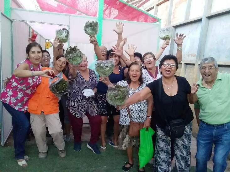 Senior Citizens from María Elena Learn to Grow Hydroponic Crops