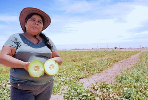 Farmers from Colonia Agrícola de Pintados Celebrate their First Harvest of Melons and Watermelons