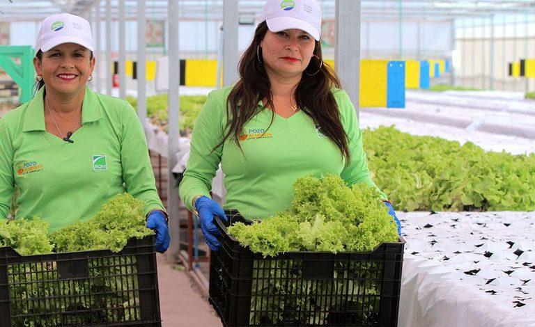 Centro de Investigación y Desarrollo Agropecuario de Pozo Almonte recibe premio Responsible Care 2020