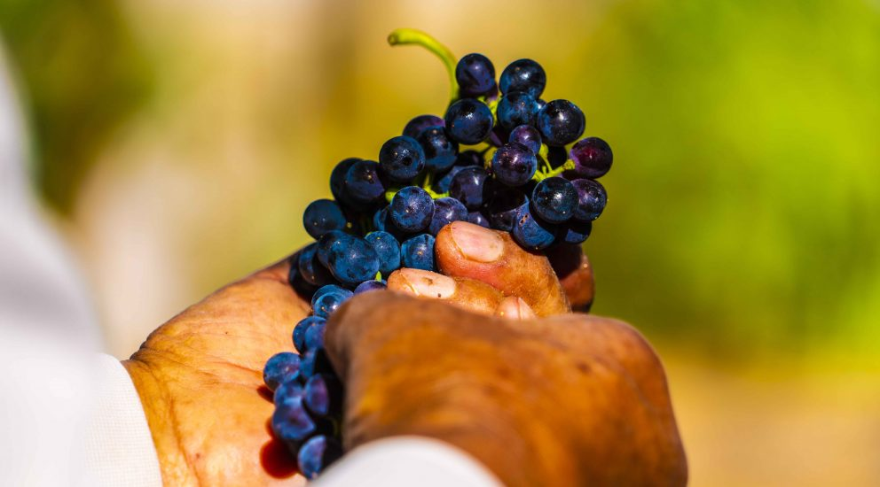 Toconao Winemakers mark the  2021 harvest with virtual activities
